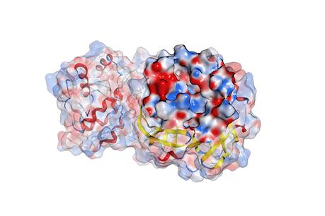 IQS desarrolla un potencial inhibidor de proteasa para combatir el COVID-19