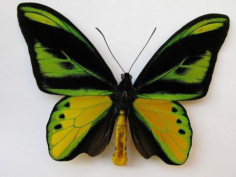 Las mariposas más bonitas del mundo