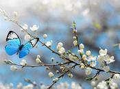 mariposas bonitas mundo