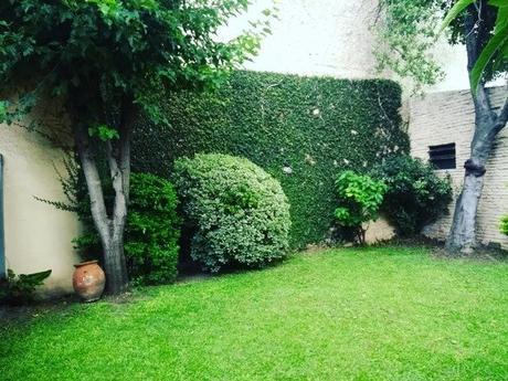 Foto: Mantenimiento de Enamorada del Muro de Jardinería Pater ...