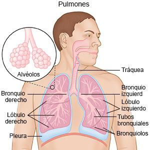 Como cuidar tus pulmones en casa