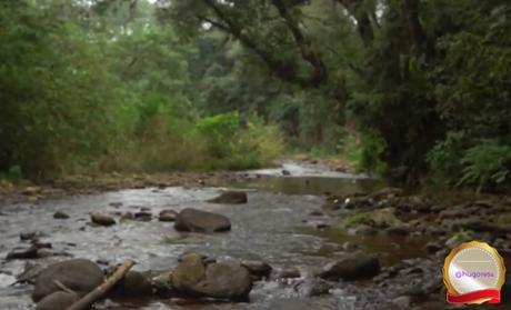 Parque Nacional El Rey creado para perservar las yungas y el chaco serrano.