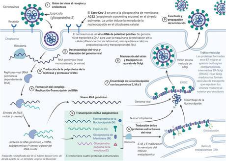 Tormenta de ideas sobre coronavirus. Post colaborativo.