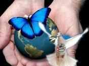 Tony Guerrero: mariposa pinto