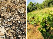 "Semana Santa ""Perdida"" vinos naturales"