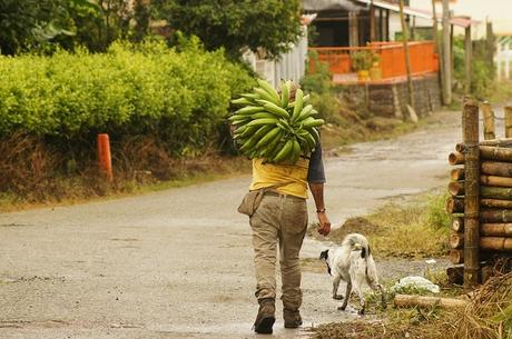 Hábitos de emprendedores campesinos durante el COVID-19