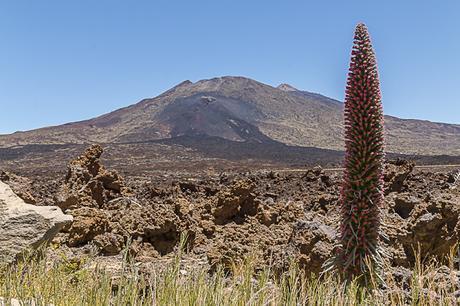 Ruta de Los Tajinastes Rojos Valle de Ucanca