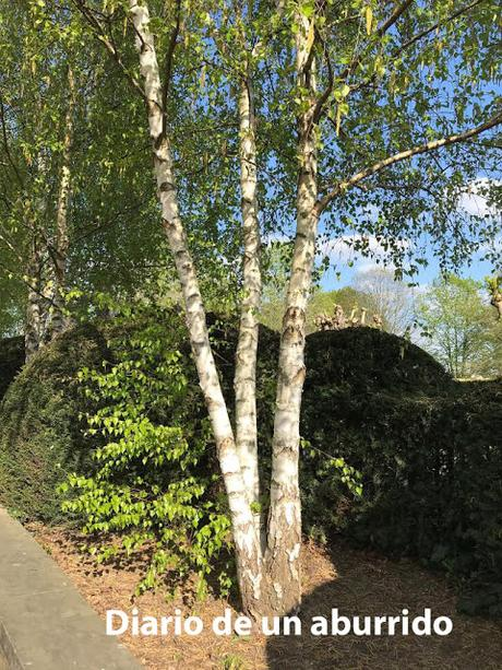 Los dieciséis árboles del Somme de Lars Mytting