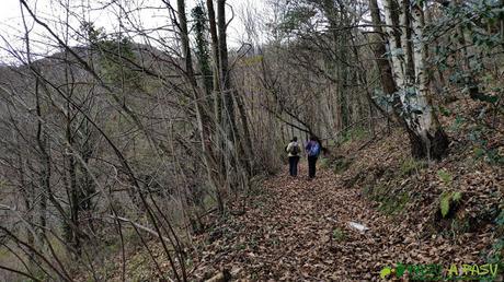 Bosque de camino a las minas
