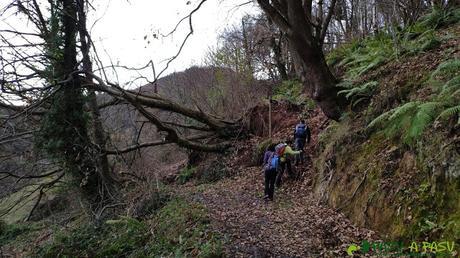Salvando árbol caído sobre el camino