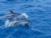Excursión Avistamiento Delfines Mular Costa Acantilados Gigantes Tenerife Agosto 2018