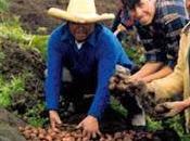 mano para quien trabaja tierra…