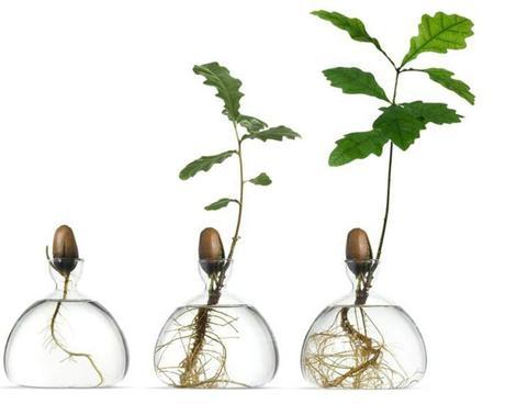 plantar hueso aguacate