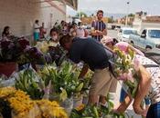 Flores despensa: floricultores potosinos rematan producto