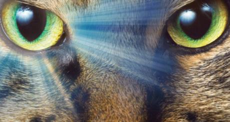Los animales y el sexto sentido, profetas de catástrofes naturales