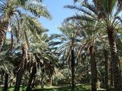 Omán: falaj casa-museo hamra
