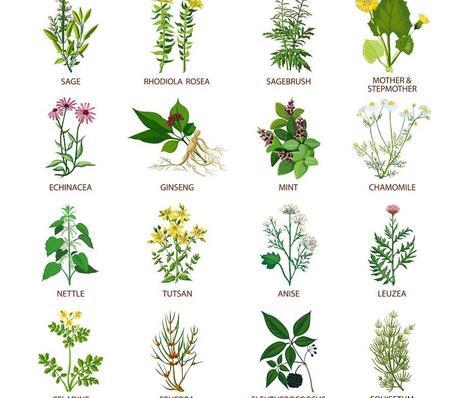 Cómo te pueden ayudar las Plantas Medicinales