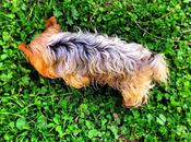 perros: beneficios según ciencia