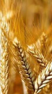 Todo lo que debes saber sobre los cereales