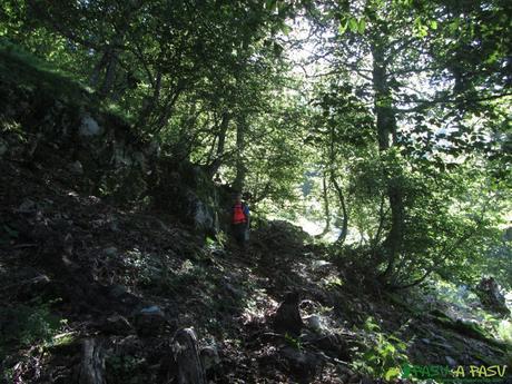 Tramo de bosque