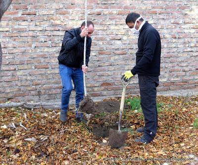 Plantaron un árbol  para concientizar sobre el cuidado del Medio Ambiente
