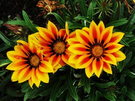 Qué plantas dan flor todo el verano y aguantan el calor
