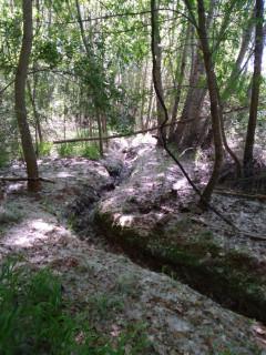 Bosques blancos en la Sierra Norte de Guadalajara