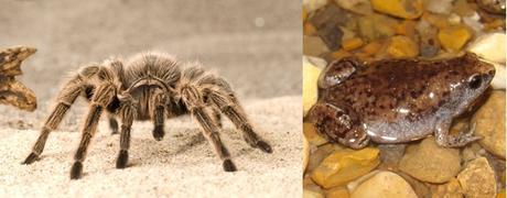 10 ejemplos increíbles de mutualismo animal