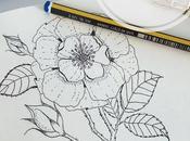 Cómo hacer propio cuaderno botánico campo.