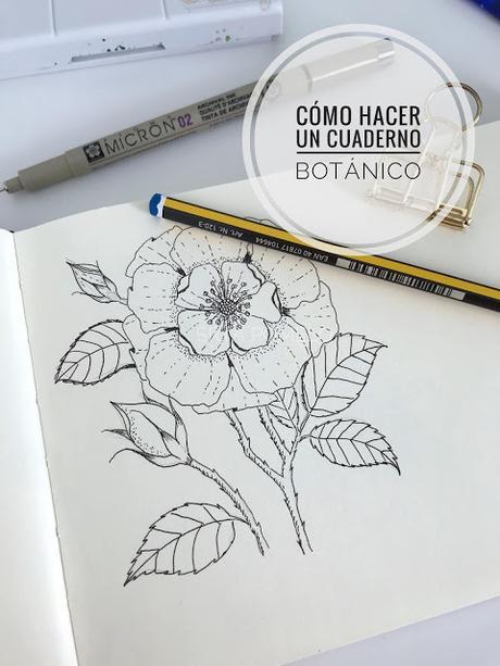 Cómo hacer tu propio cuaderno botánico o de campo.