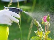 Recetas caseras ecológicas para plantas.