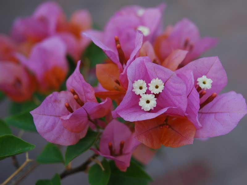 Flores de verano julio paperblog - Flores de verano ...