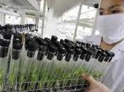 Biotecnología: otra forma contaminar.