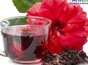 ¿Por bueno consumir flor Jamaica?