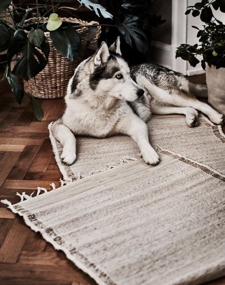 BOTANISK La nueva edición limitada de IKEA