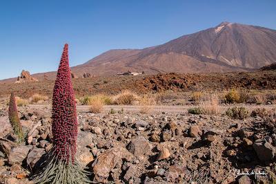 Ruta Las Siete Cañadas y Tajinastes Rojos