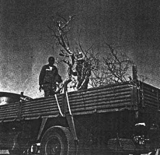 El árbol de Teneré y el idiota que se estampó contra él
