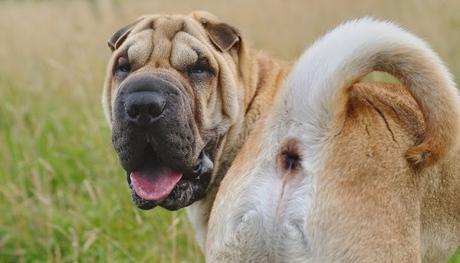 Pedos de perro, análisis y almacenamiento