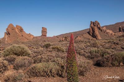 Tajinastes Rojos El Teide y Roques García