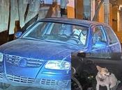 Atropella perro luego abandona propios perros Lomas