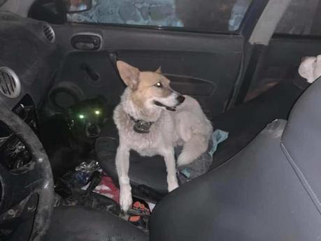 Atropella perro y luego abandona sus propios perros en Lomas