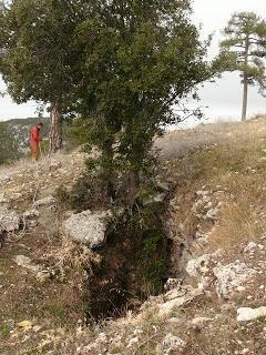 El carábido endémico de cuevas de la Sierra de Cazorla