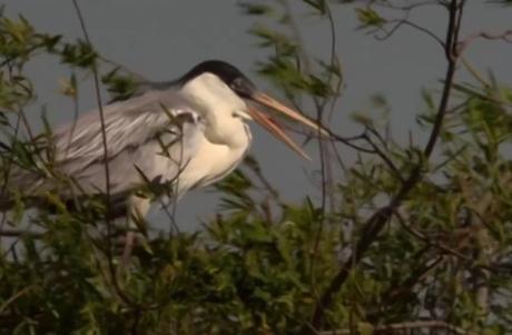 El paraíso natural de las aves en los Esteros de Iberá.