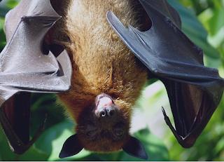 Científicos inspirados por murciélagos y víboras para restablecer la sensibilidad a la luz.