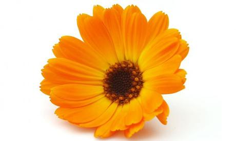 beneficios calendula