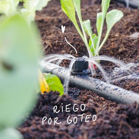 Cómo proteger tu huerto y tus plantas del calor del verano