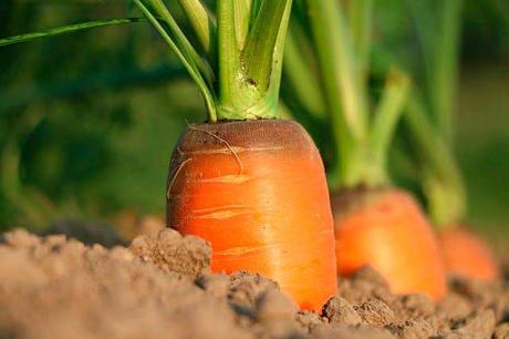 Soñar con zanahorias