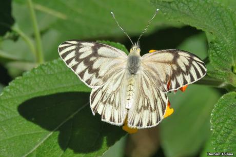 Polinizadores de otoño (y otros bichos)