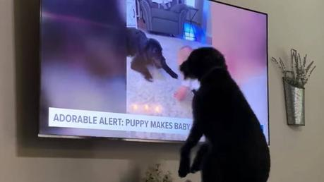 Perro se hace viral