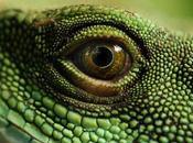 Curiosidades sobre reptiles